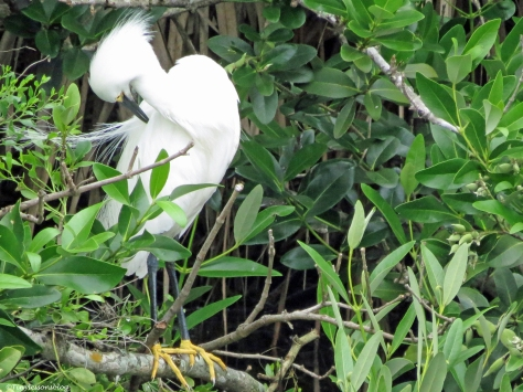 snowy egret on a stormy day sand key clearwater Florida