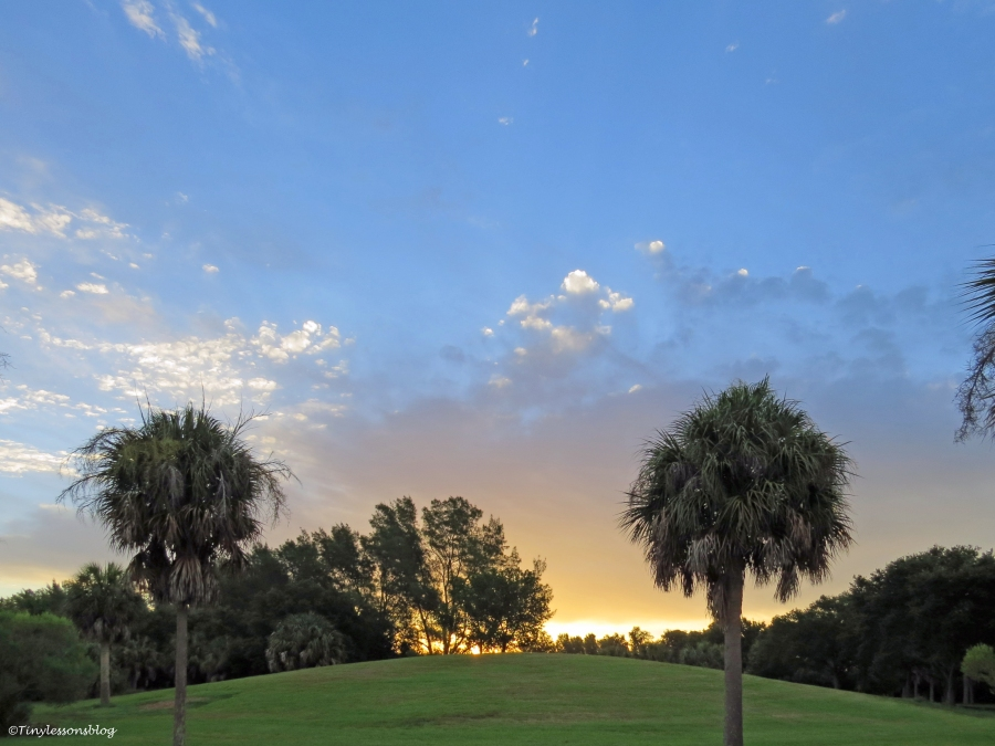 sunrise at the salt marsh Sand key Park Clearwater Florida