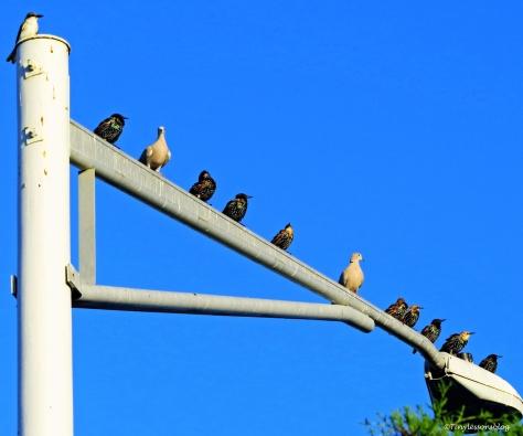 birds at sunrise INSP