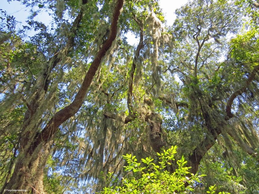 ecological preserve jax