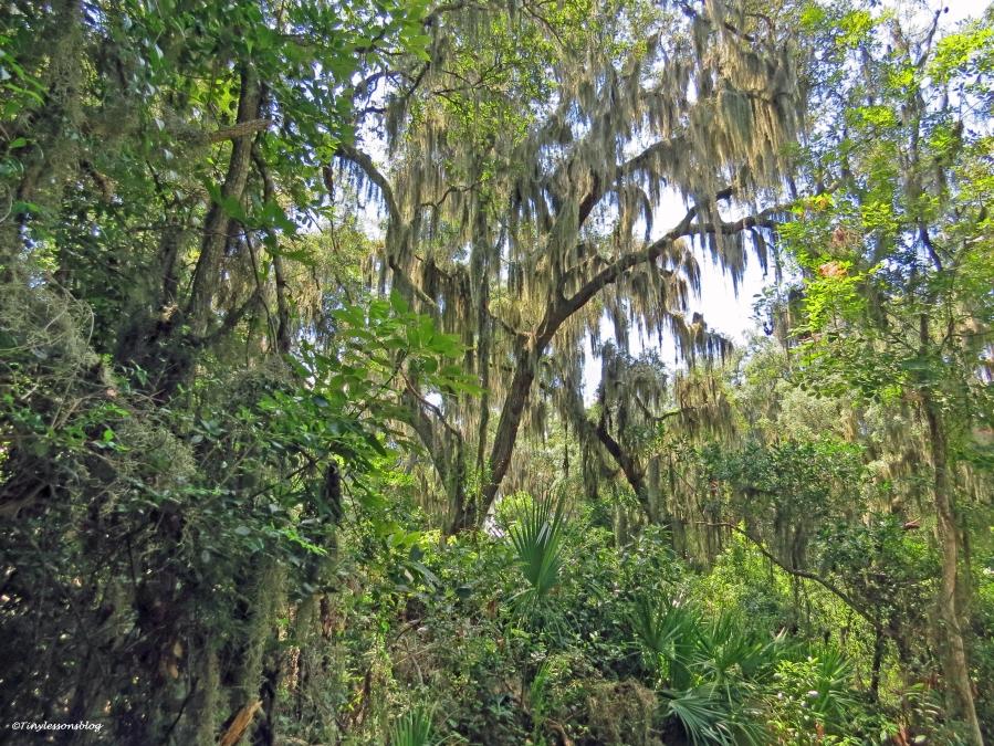 preserve jungle jax