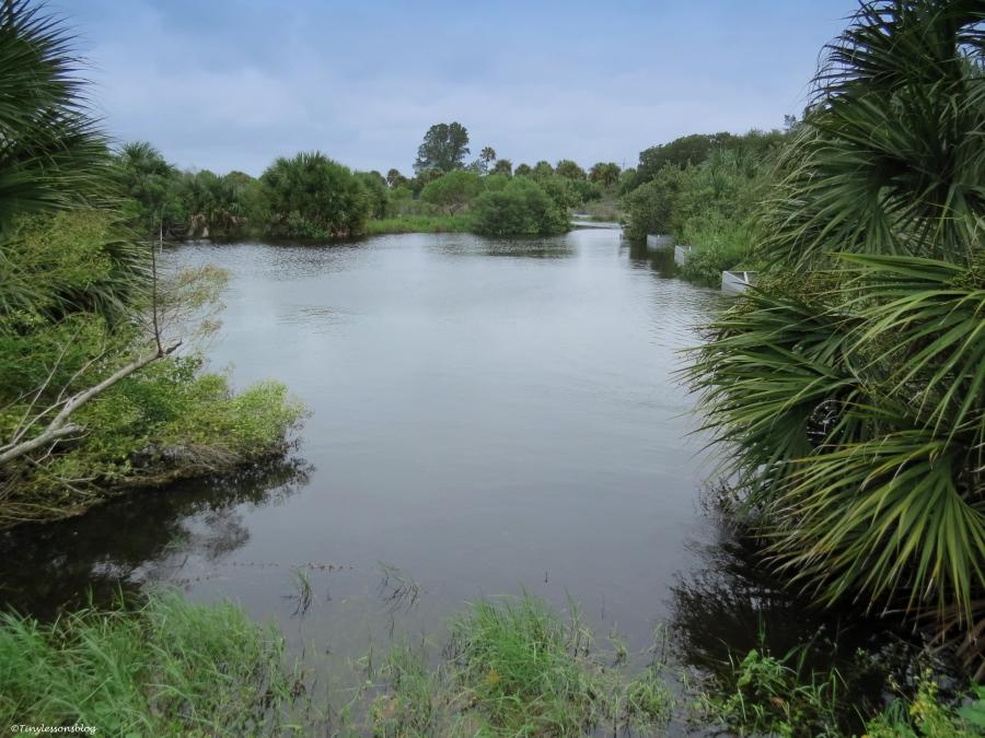 salt marsh under water Sand Key park Clearwater Florida
