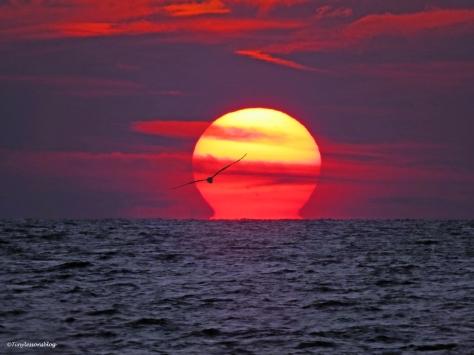 Gulf sunset clearwater florida