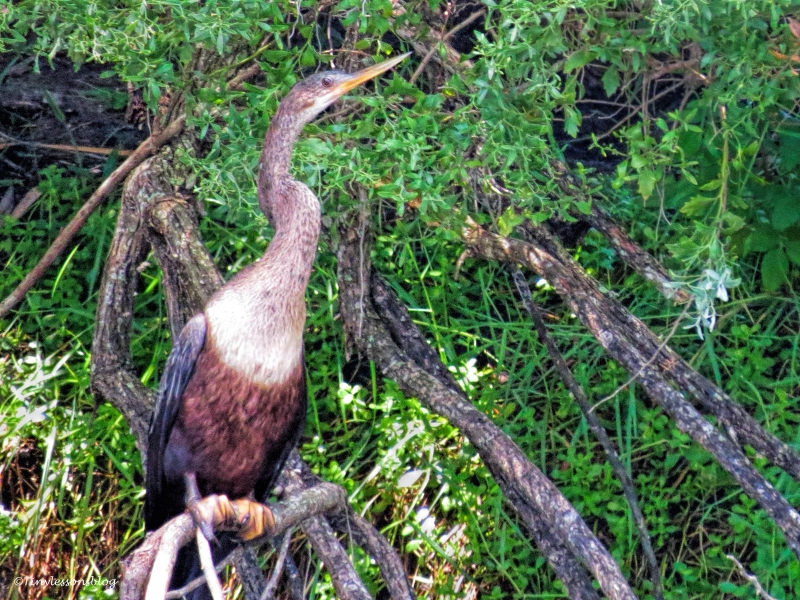 anhinga sand key park clearwater florida