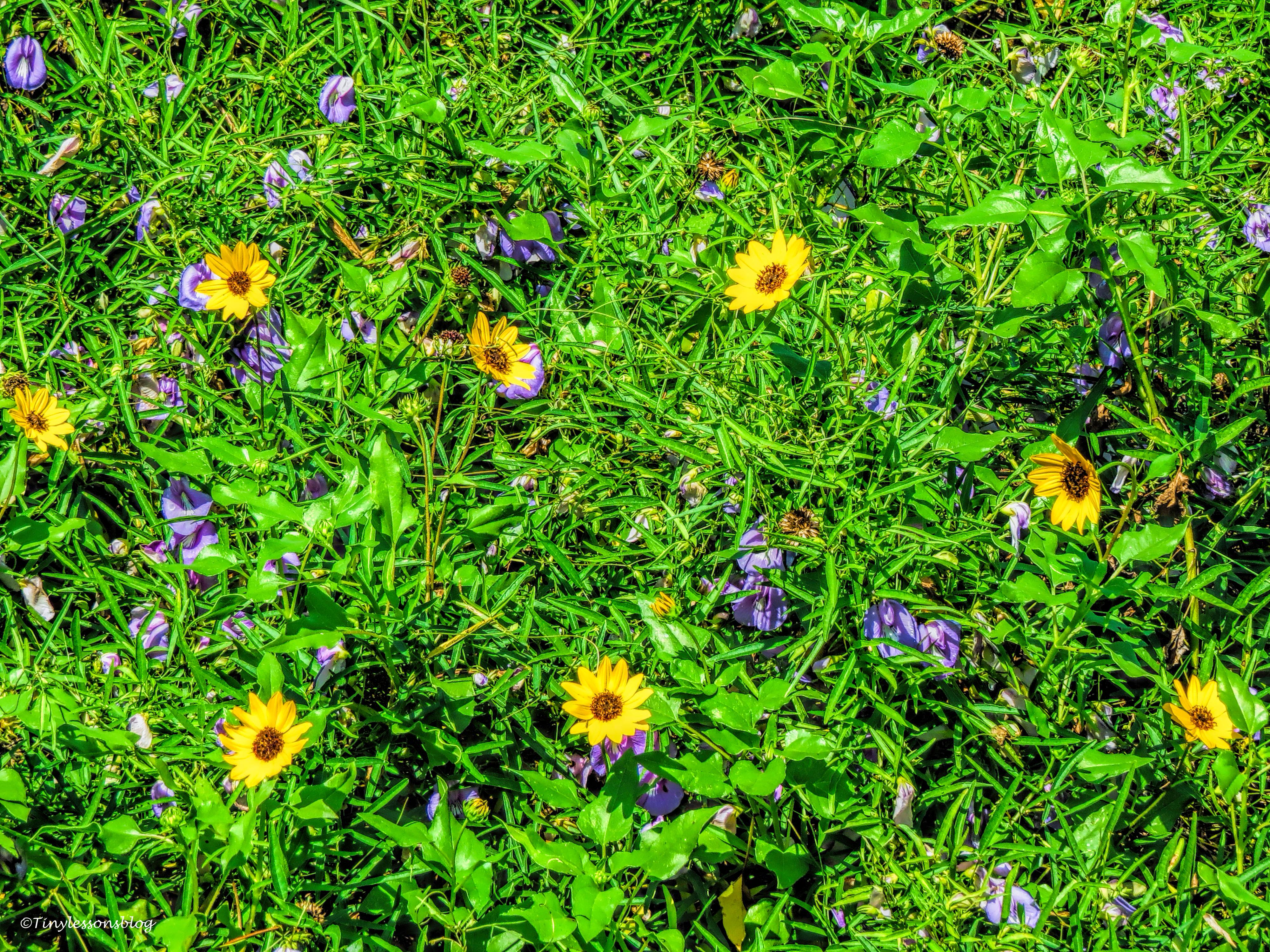beach wild flowers ud 24