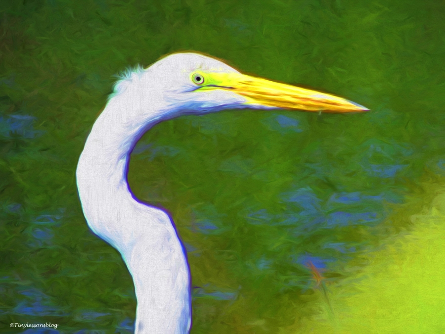 great while egret portrait paint
