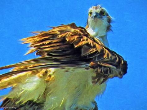 mama osprey portrait paint