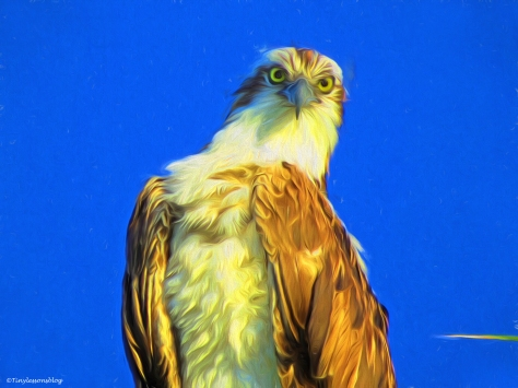 papa osprey portrait paint