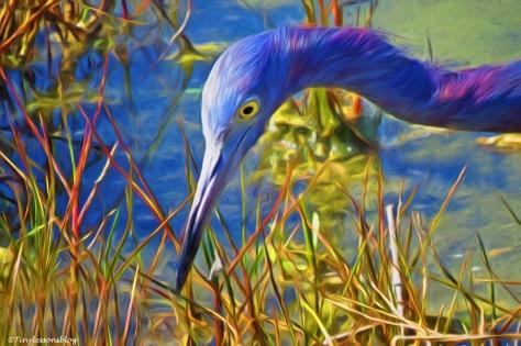 portrait of little blue heron3 paint