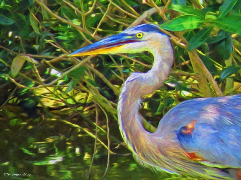 portrait of the young great blue heron paint