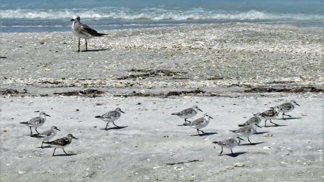 sanderlings 2 running ud24 16x9