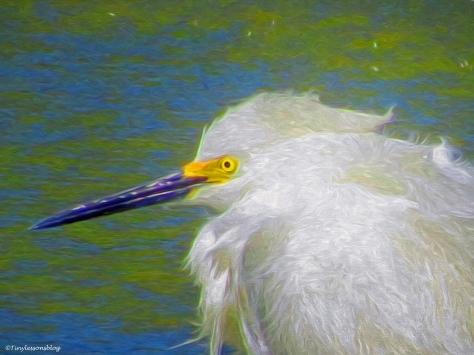 snowy egret portrait paint