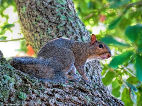 squirrel sand key park clearwater florida