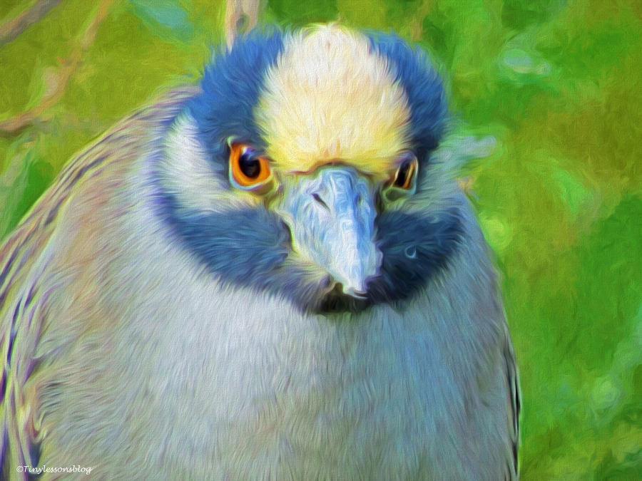yellowcrowned night heron portrait paint