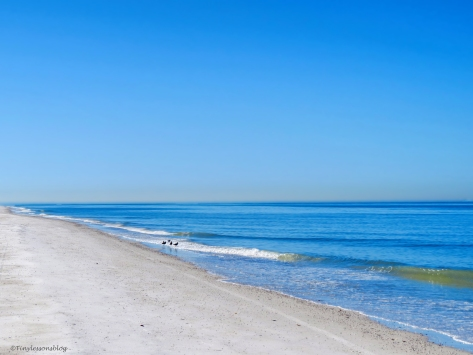 caladesi island beach hp