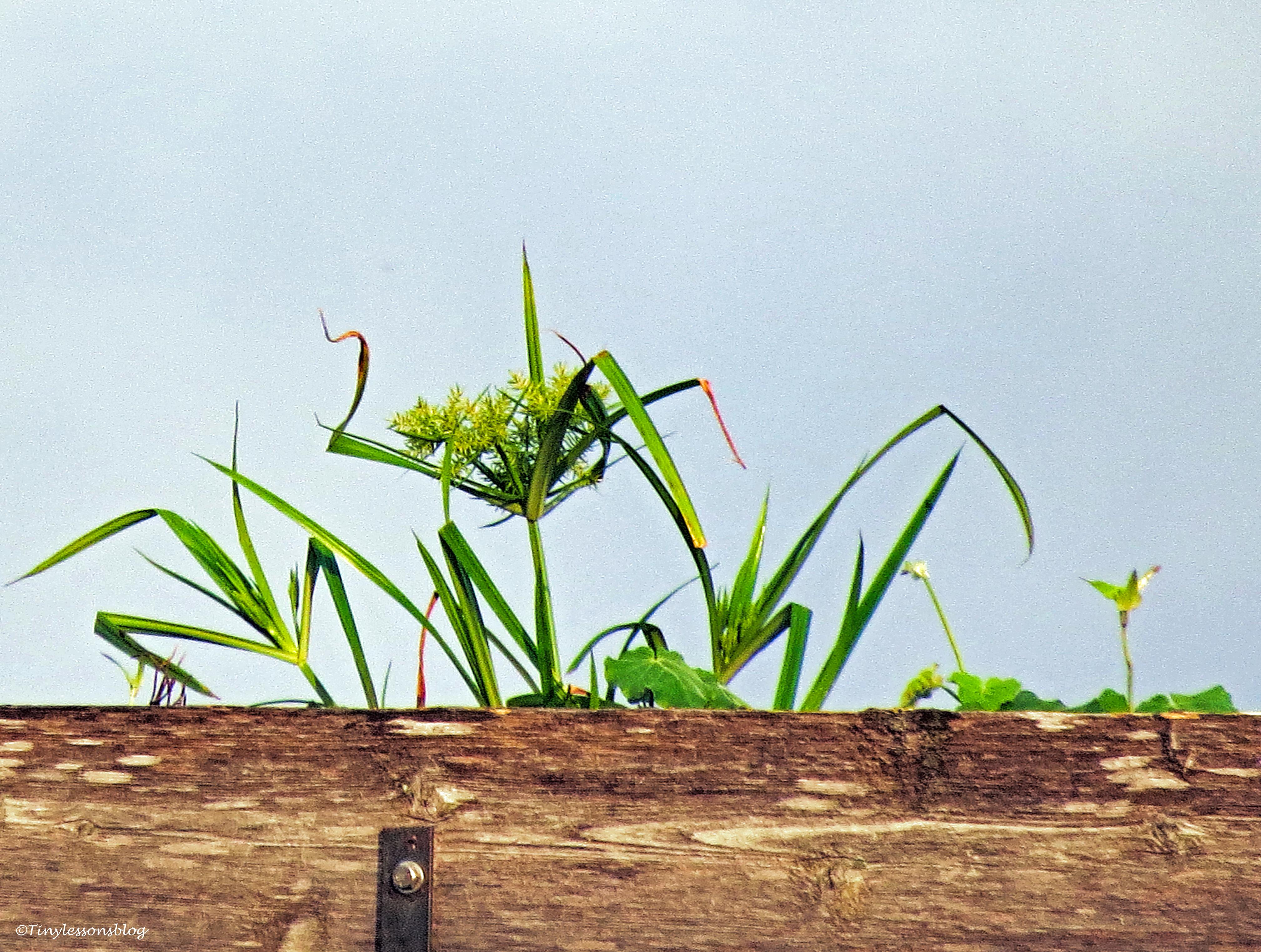 mama osprey's garden ud25 b