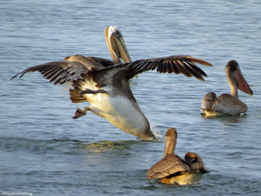 pelican diving ud26