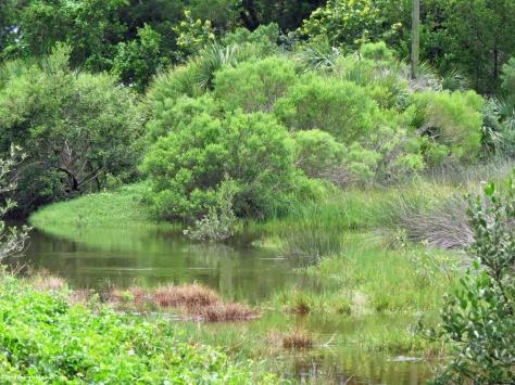salt marsh next to the osprey nest HP