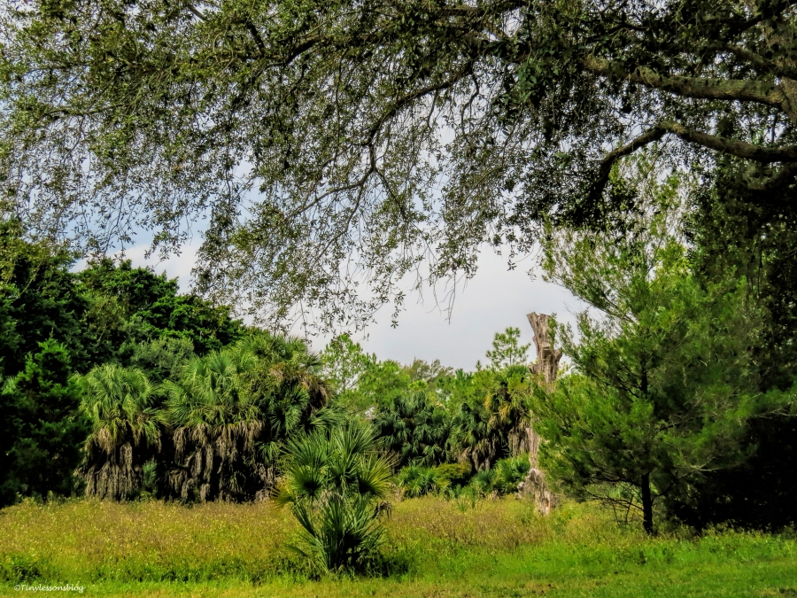 forest Sand Key Park Clearwater Florida
