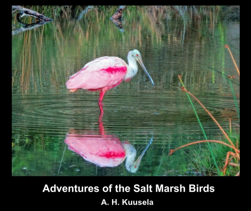 AdventuresoftheSaltMarshBirds cover