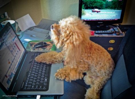 Bumble at laptop