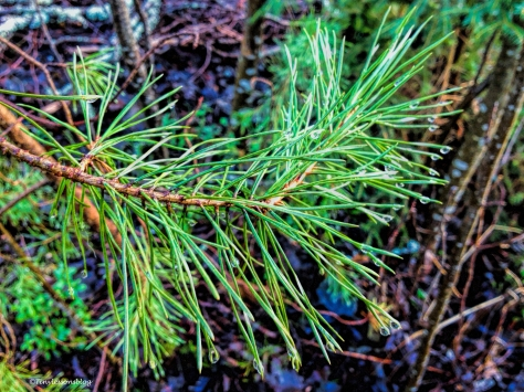droplets in the forest BX