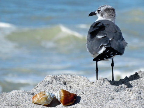 gull and shells ud31