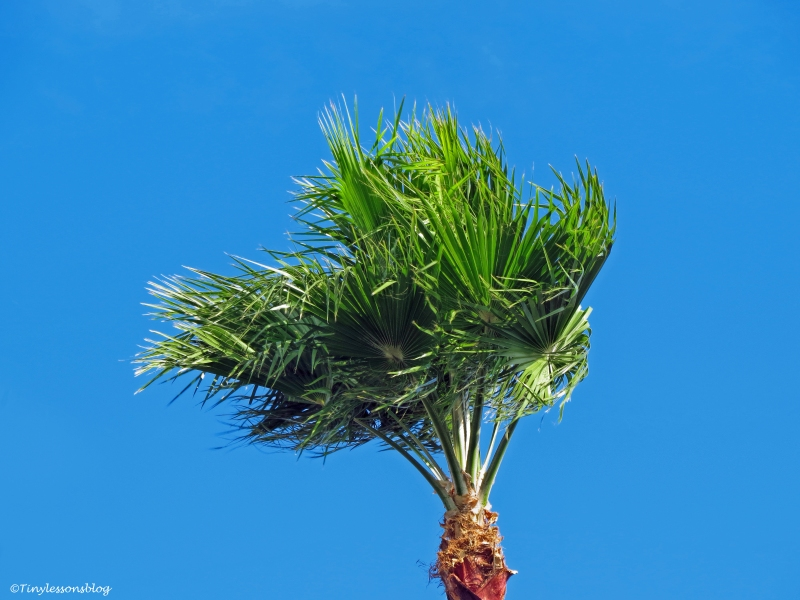 palm in the wind BX