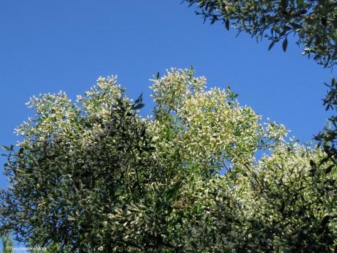 salt marsh flower tree ud31