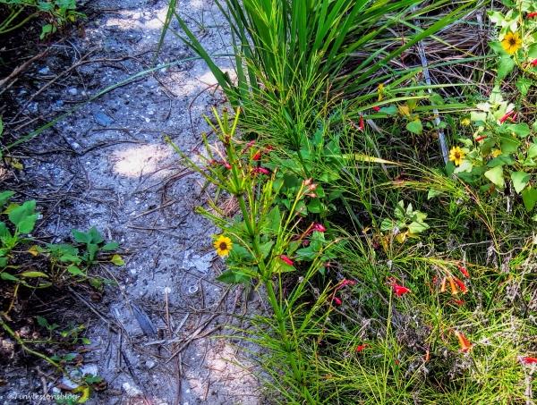 wild flowers on my path BX