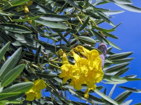 yellow flowers closeup ud31