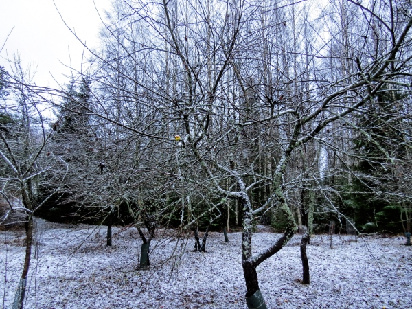 apple garden and snow fi