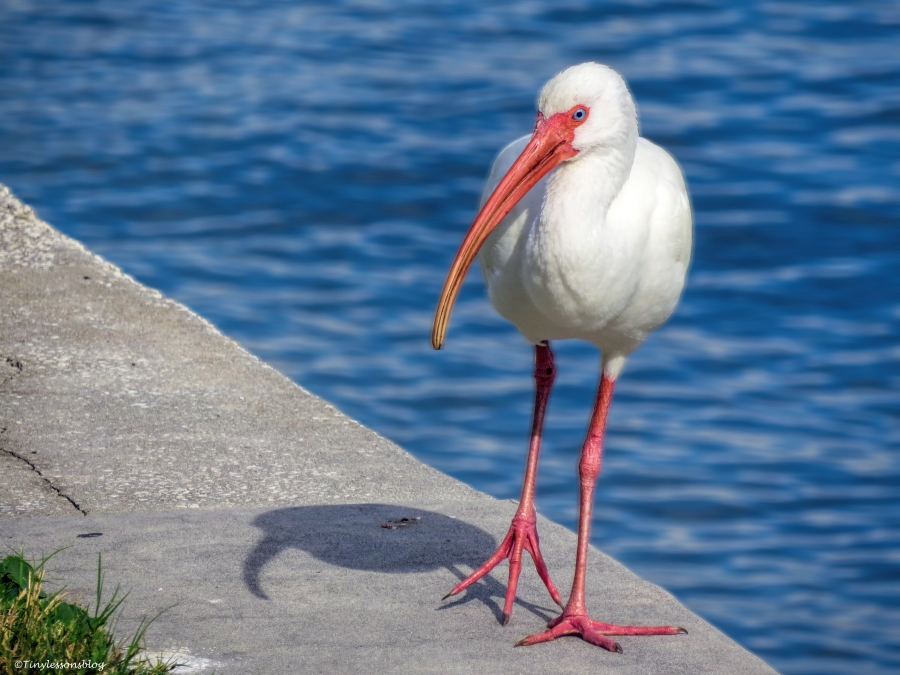 ibis on the bay side ud35