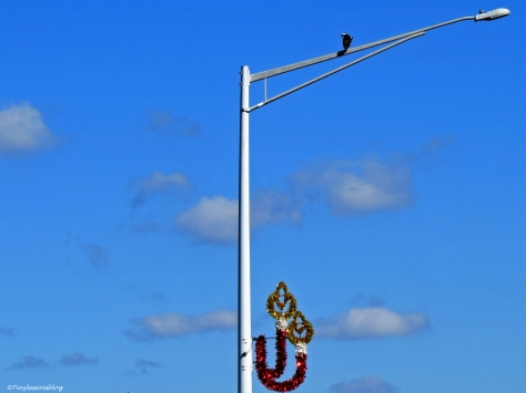 mama osprey ud35