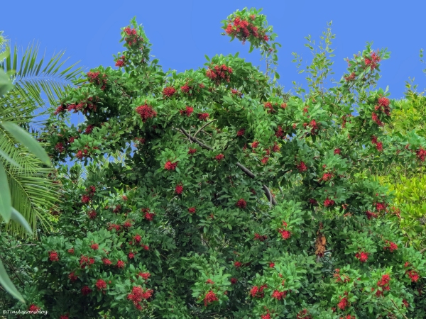 red flower tree ud35