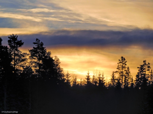 sunset over the forest in Finland