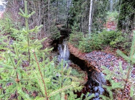 small stream in Finland
