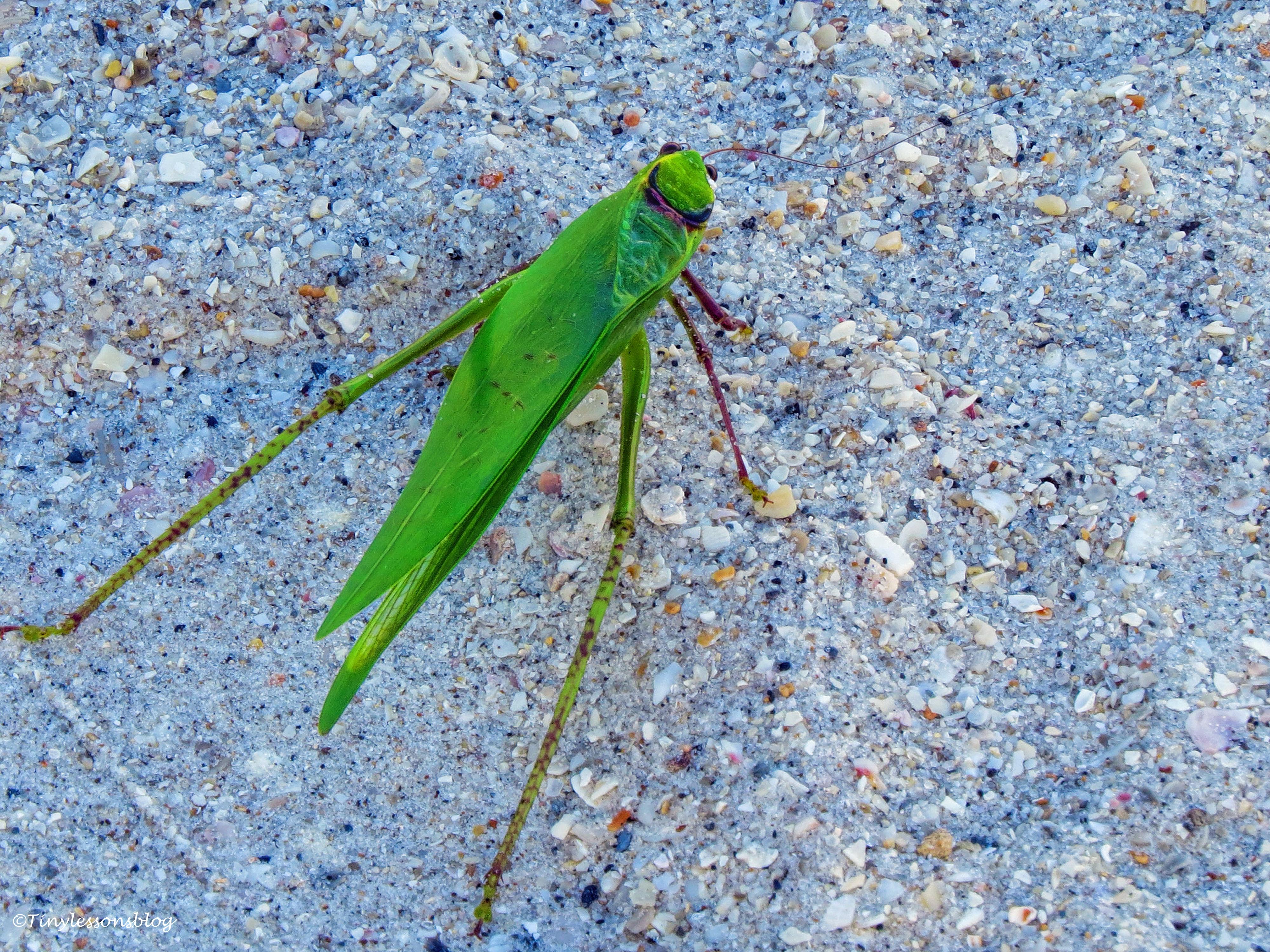 walking leaf ud35