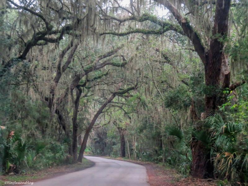 canopy road amelia island