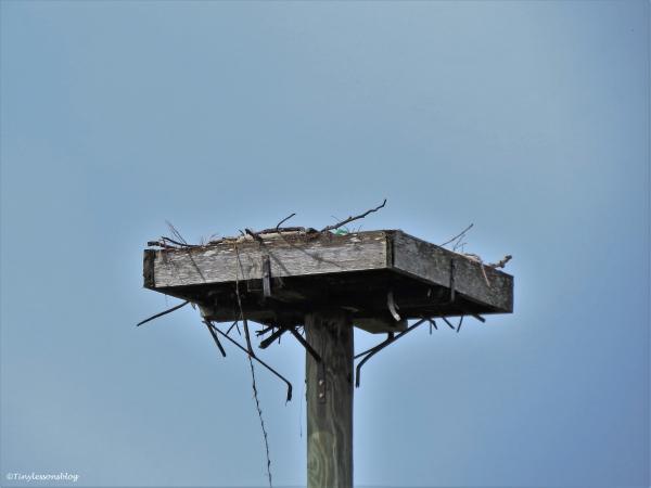 empty nest ud45