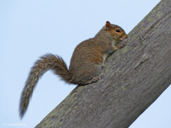 squirrel 2 ud45