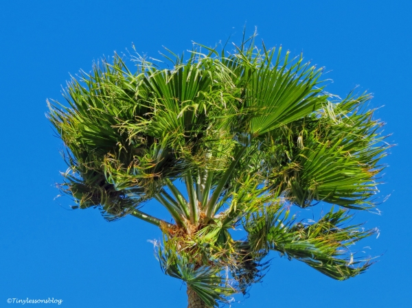 a palm tree in the wind ud46