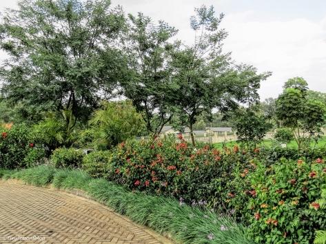 flower bed nairobi ud48