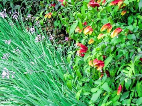flowers 2 Nairobi ud48