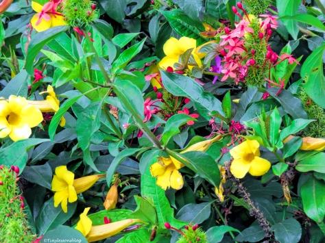 flowers in Nairobi ud48