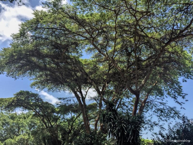 green Nairobi ud48