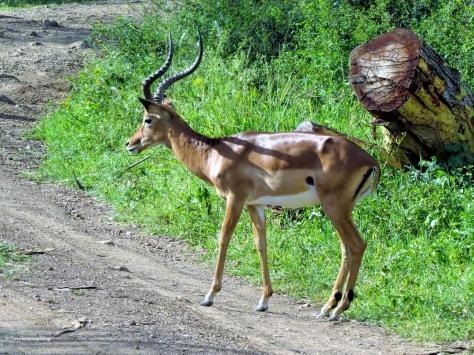 impala ud48
