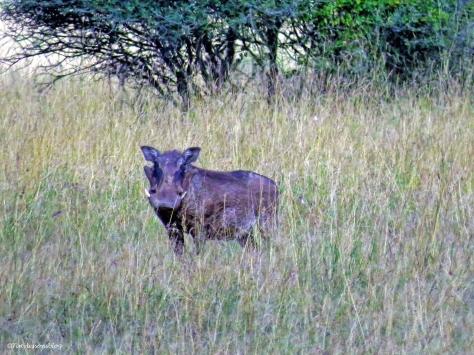 warthog ud48