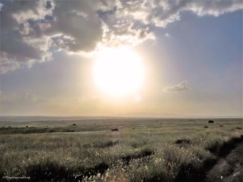 savannah sunset ud48