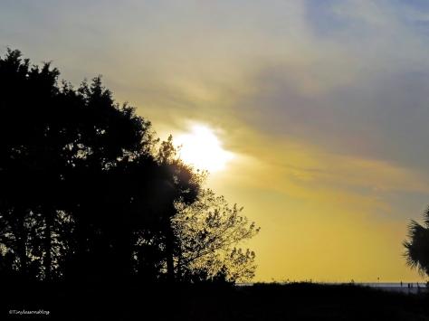 sunset at salt marsh 2 ud50